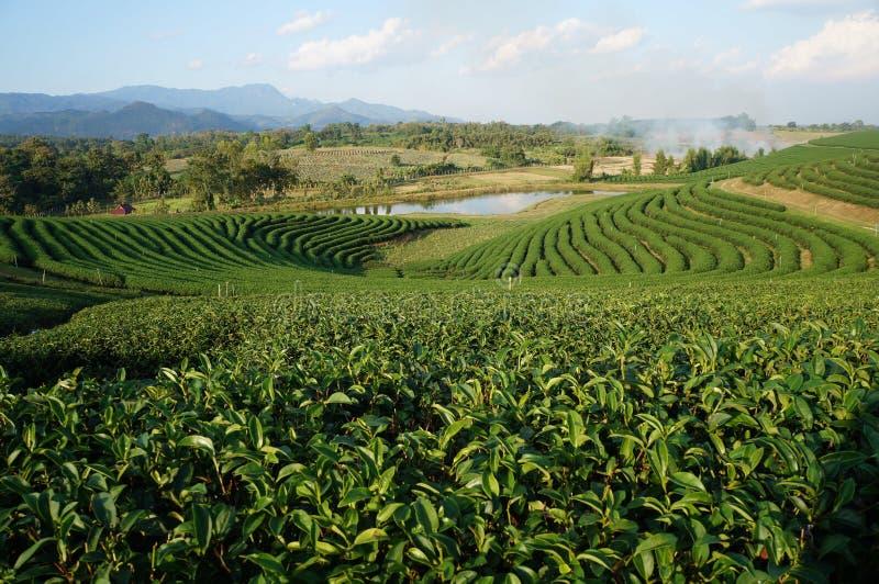 Choui Fong Tea Co fotografia stock