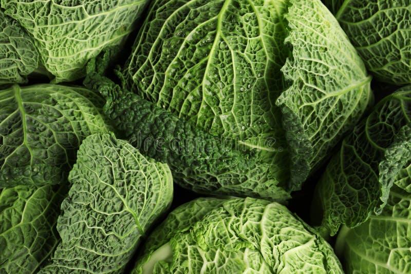 Choux de Milan verts frais comme fond photo stock