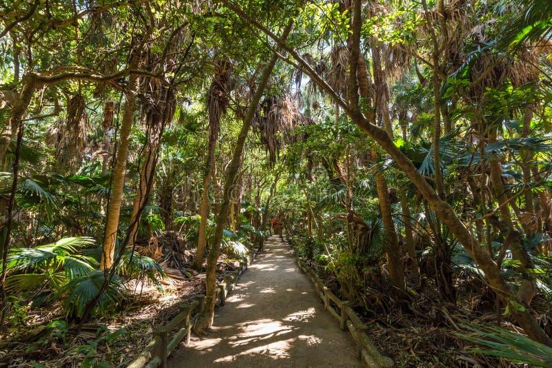 Chova Forest Park no santuário de Aoshima em Miyazaki, Japão fotos de stock