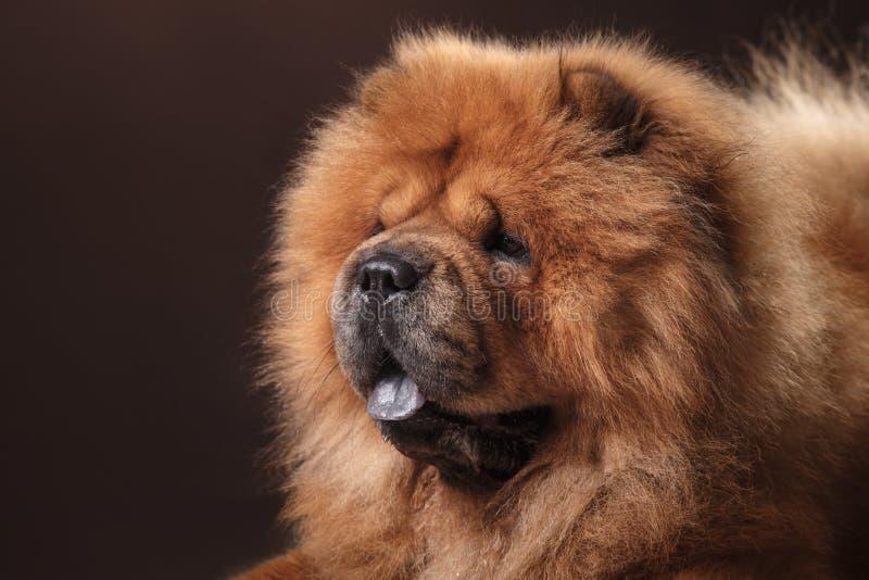 chow διασταύρωσης σχεδίου αναδρομικό ύφος καρτών σκυλιών grunge παλαιό στοκ φωτογραφία με δικαίωμα ελεύθερης χρήσης
