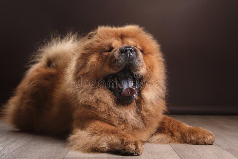 chow διασταύρωσης σχεδίου αναδρομικό ύφος καρτών σκυλιών grunge παλαιό στοκ φωτογραφία