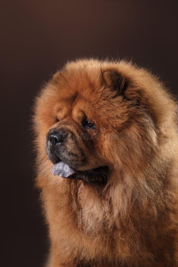 chow διασταύρωσης σχεδίου αναδρομικό ύφος καρτών σκυλιών grunge παλαιό στοκ φωτογραφίες με δικαίωμα ελεύθερης χρήσης