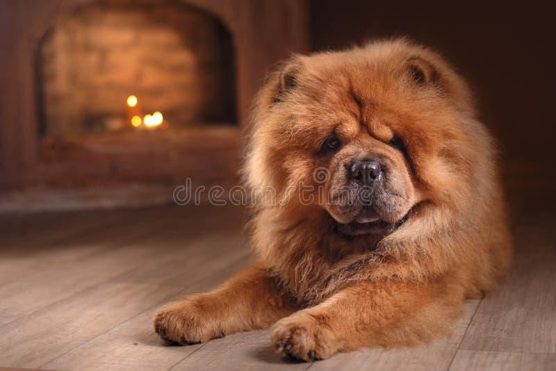 chow διασταύρωσης σχεδίου αναδρομικό ύφος καρτών σκυλιών grunge παλαιό στοκ εικόνες