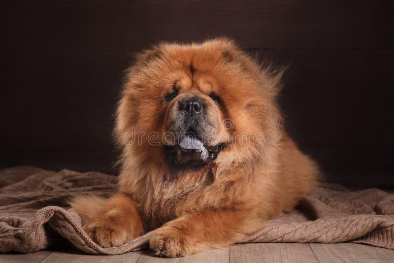 chow διασταύρωσης σχεδίου αναδρομικό ύφος καρτών σκυλιών grunge παλαιό στοκ εικόνα με δικαίωμα ελεύθερης χρήσης
