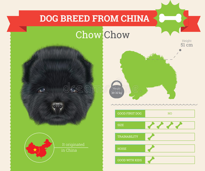 Chow Chow Dog breed infographics set. royalty free illustration