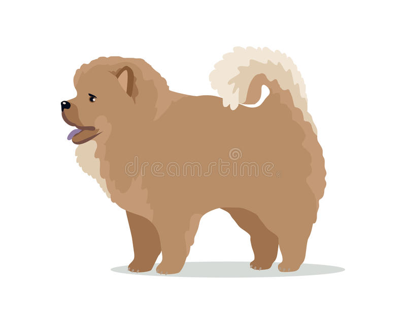 Chow Chow Dog Vector Illustration Stock Vector Illustration Of