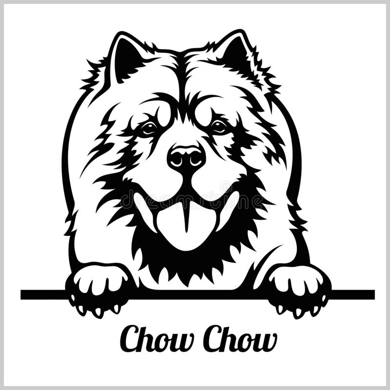 Free Chow Chow - Peeking Dogs - Breed Face Head Isolated On White Stock Photos - 143689663