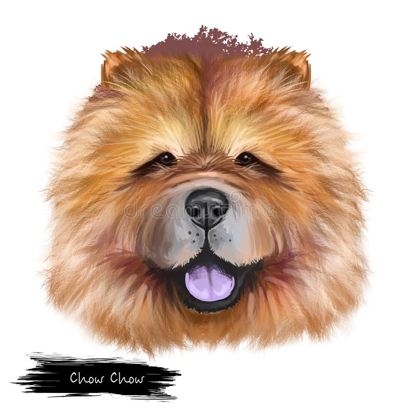 Chow Chow dog breed isolated on white background digital art illustration. Cute pet hand drawn portrait. Graphic clipart vector illustration