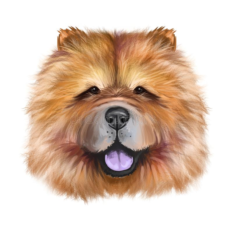 Chow Chow dog breed isolated on white background digital art illustration. Cute pet hand drawn portrait. Graphic clipart design. Realistic animal stock illustration