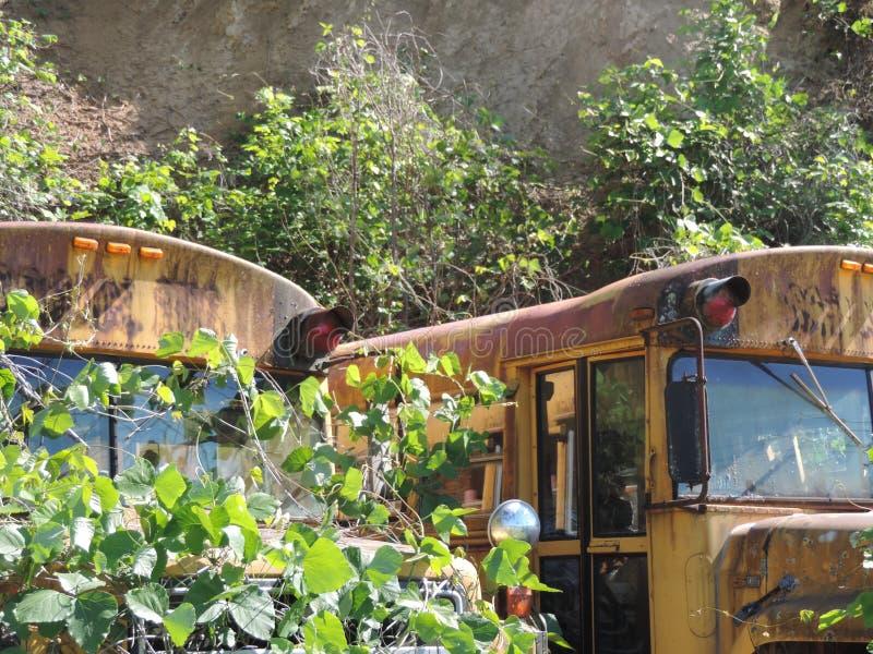 Chować autobus szkolnego obrazy royalty free