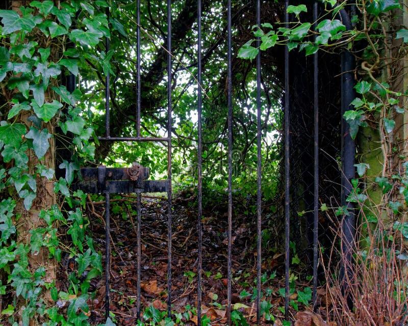 Chowana dokonanego żelaza brama tajny ogród, Welwyn wioska, Anglia zdjęcie stock