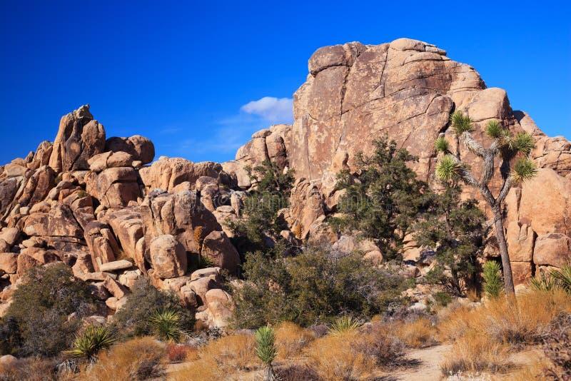 chowana Joshua park narodowy skały drzewa dolina zdjęcia royalty free