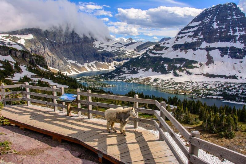 Chowany jezioro, lodowa park narodowy, Montana obraz stock