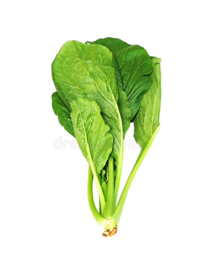 Choy Sum or Bok choy or chinese cabbage vegetable isolated on white background. Green fresh vegetable royalty free stock image