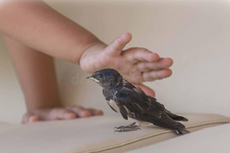 Choyer l'oiseau images stock