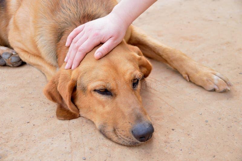 Choyer un chien égaré photographie stock
