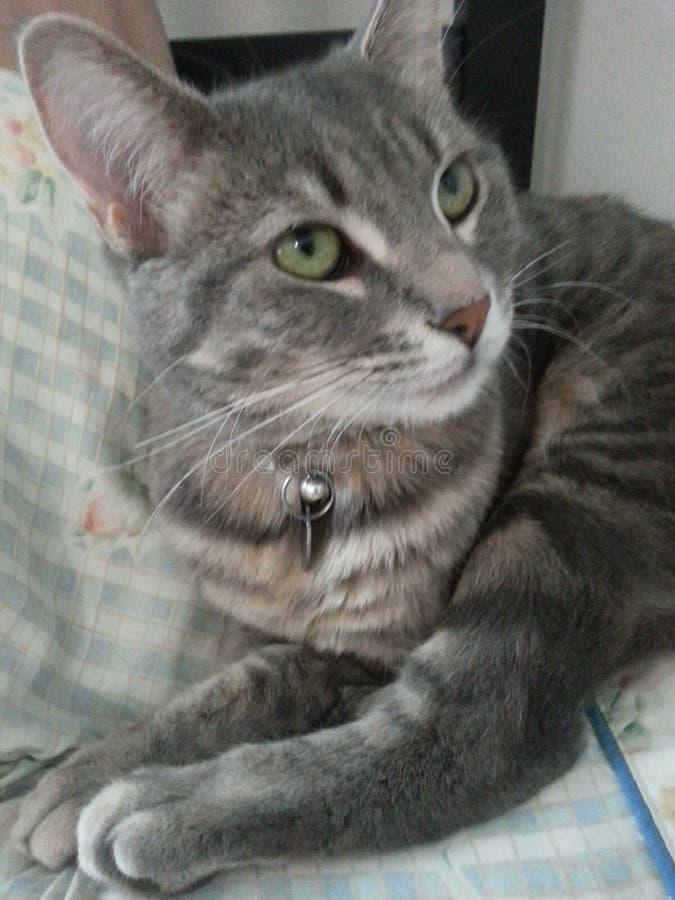 Choyez le chat photos libres de droits