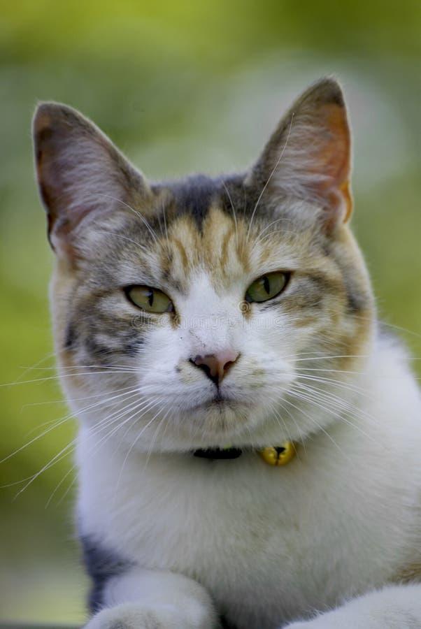 Choyez le chat image libre de droits