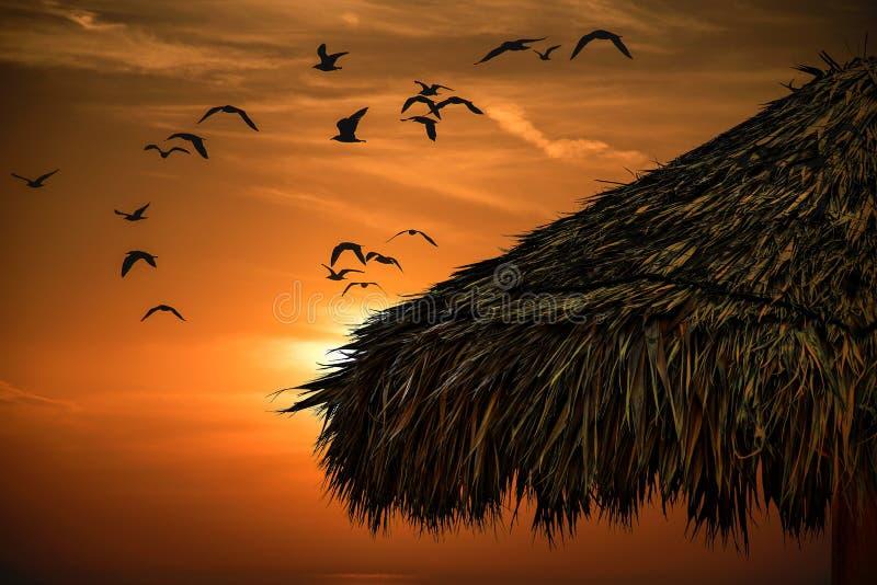 Choza de la hierba y puesta del sol tropical fotos de archivo