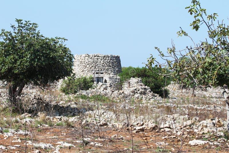 Choza de la piedra seca con la b?veda en la arboleda de olivos en Salento en Puglia en Italia imágenes de archivo libres de regalías