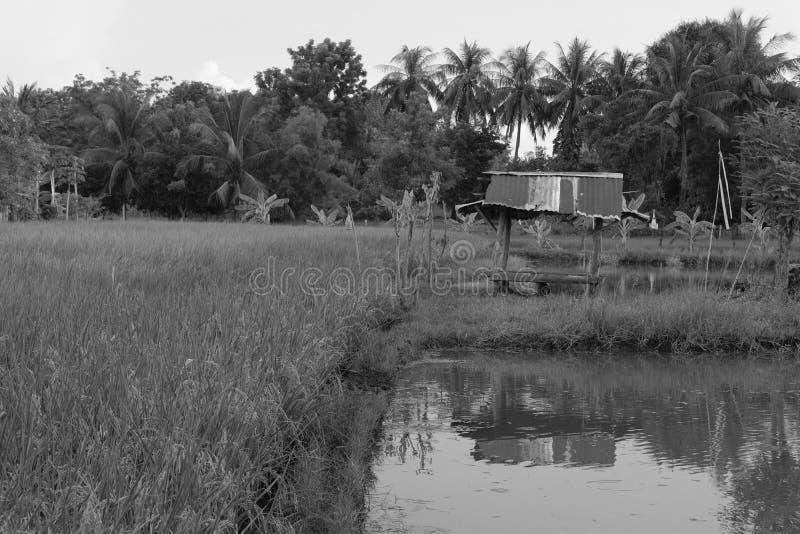 choza en campo del arroz en la puesta del sol Tailandia Asia fotos de archivo libres de regalías