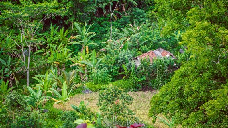Choza en cuento entre los árboles de plátano verdes enormes en acompañantes musicales, Bali, Indonesia fotos de archivo libres de regalías