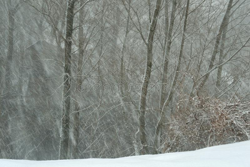 Choza en el bosque del invierno foto de archivo