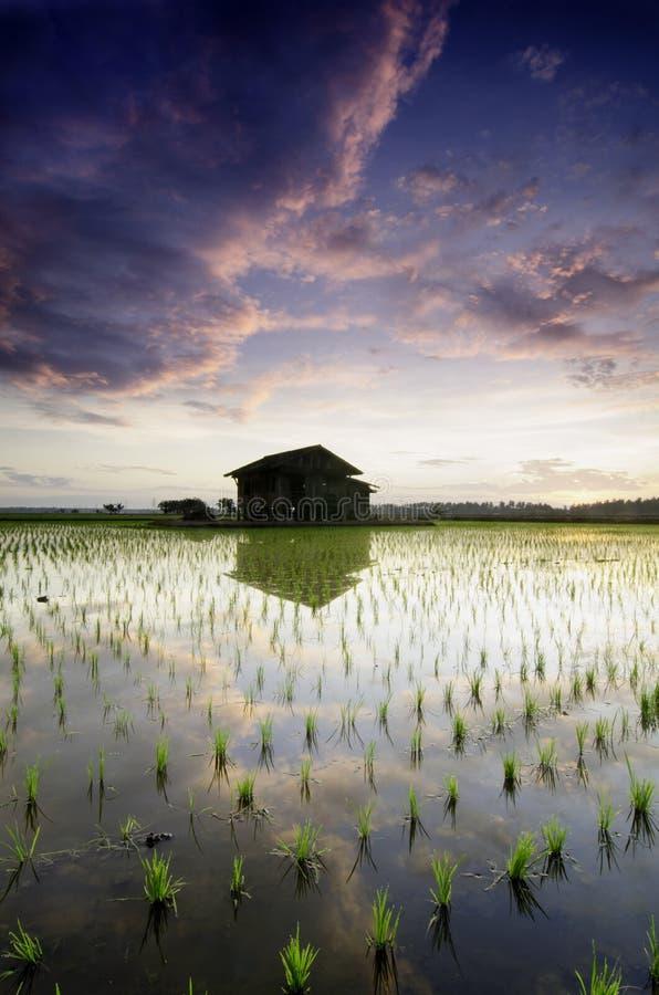 Choza vieja borrosa del fondo en los campos de arroz medios nubes oscuras suaves y dramáticas reflexión en el agua y el cielo her fotos de archivo