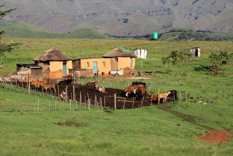 Chozas y ganado rurales imagen de archivo