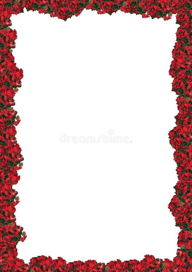 Chrismas floral frame stock photography