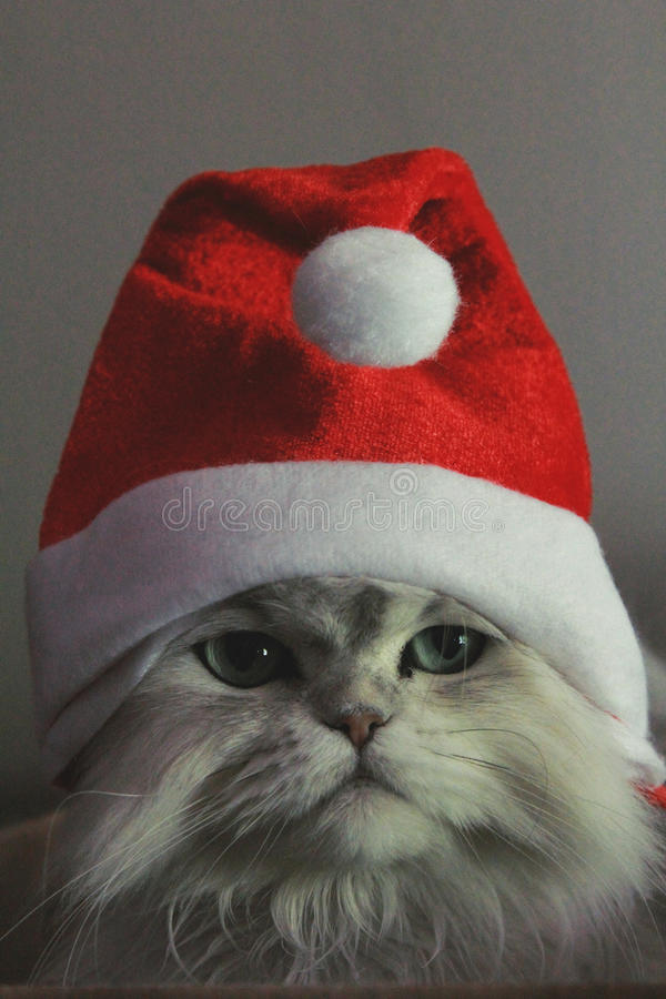 Chrismas Kitty image libre de droits