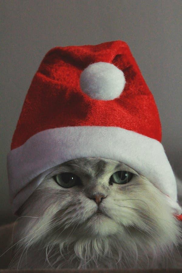 Christmas Kitty royalty free stock image