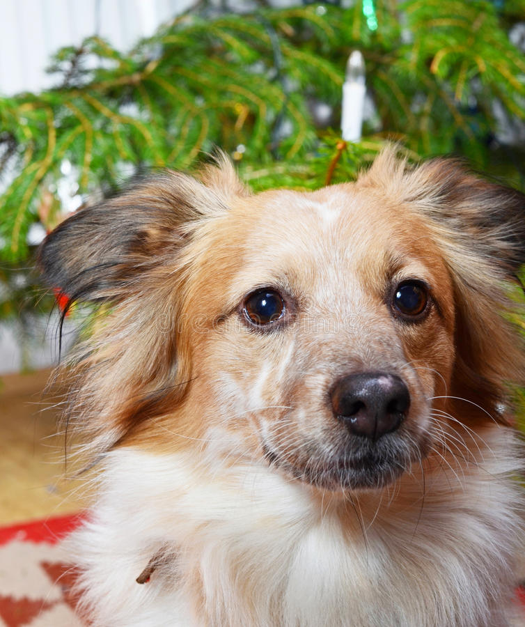 Christams Hund stockfotografie