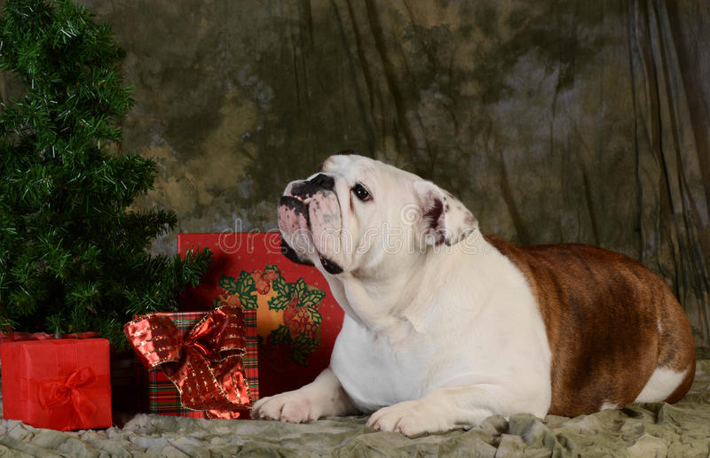 Christams Hund lizenzfreies stockfoto