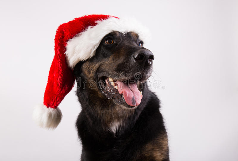 Christams Hund stockfoto
