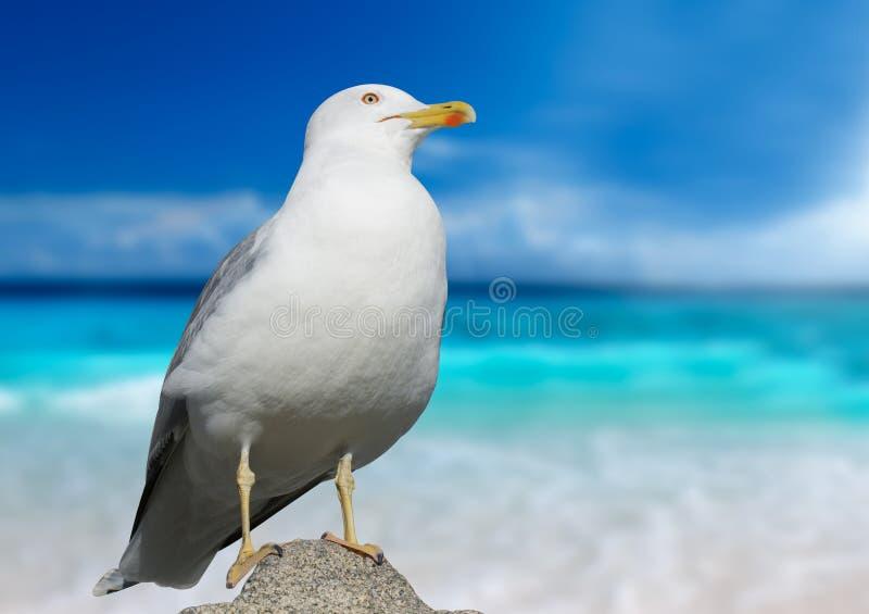 Download Christi特写镜头语科库拍摄了海鸥南得克萨斯美国 库存图片. 图片 包括有 开会, 敌意, 详细资料 - 72365757