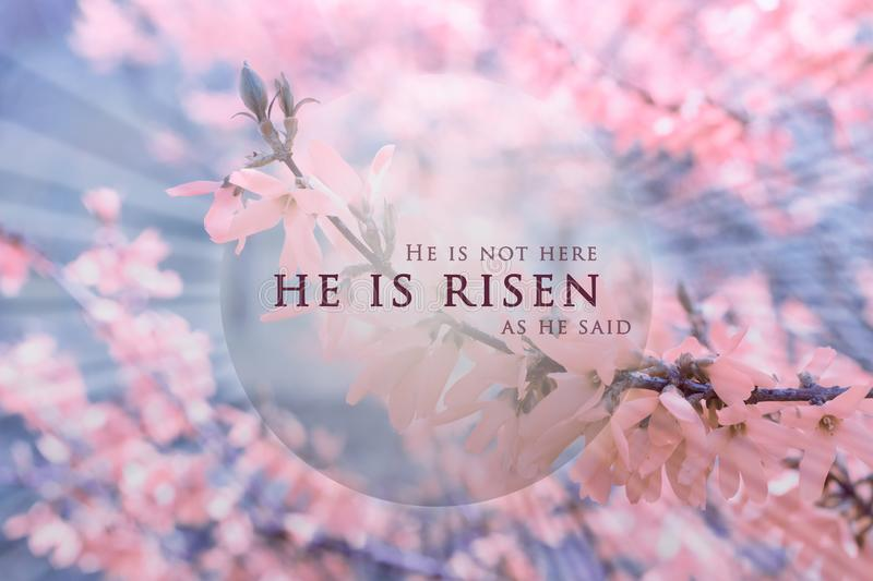 Christian Easter background, religious card. Jesus Christ resurrection concept. He is risen text on a background with pink, bright flowers, delicate spring vector illustration