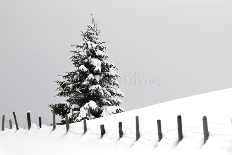 Download Christmas stock image. Image of tree, daylight, covered - 6853081