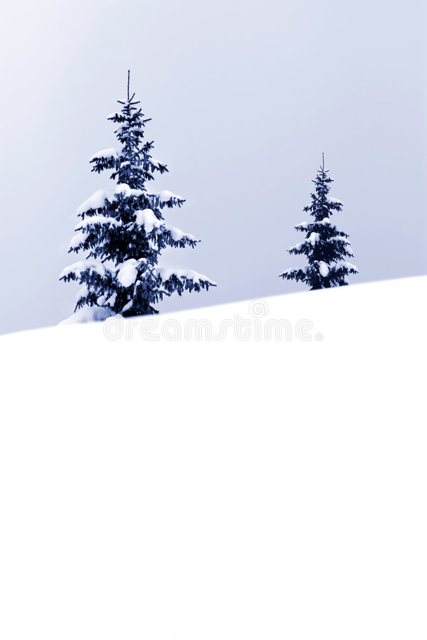 Download Christmas stock image. Image of season, tree, forest, daylight - 6865969