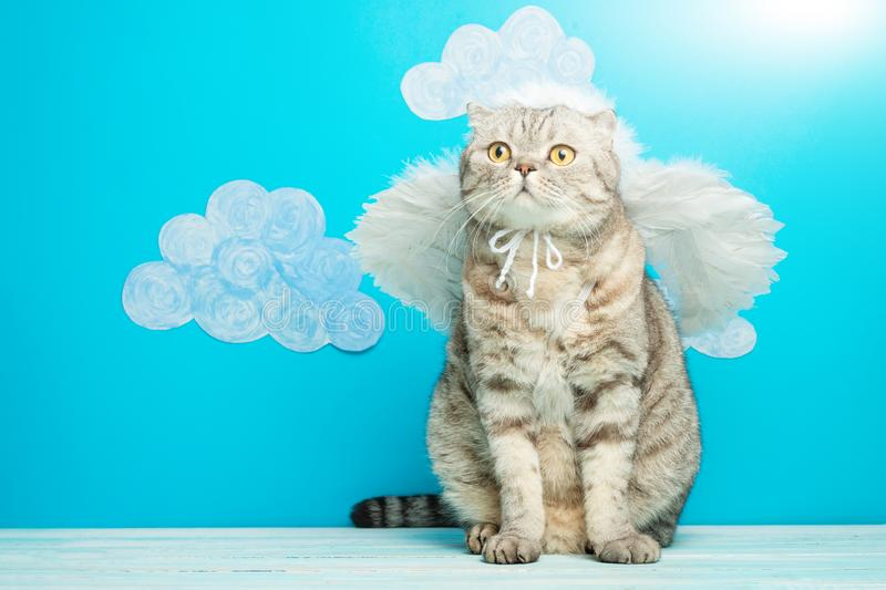 Christmas angel cat on a blue background with birds. New Year kitty, pet.  stock images