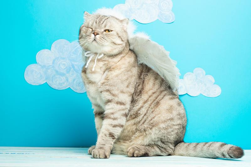Christmas angel cat on a blue background with birds. New Year kitty, pet.  stock photography