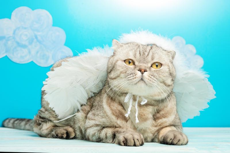 Christmas angel cat on a blue background with birds. New Year kitty, pet.  royalty free stock photos