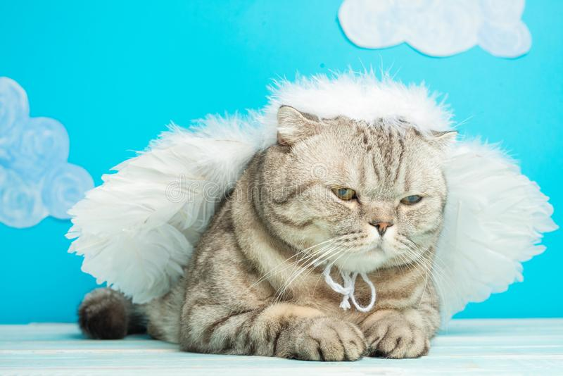 Christmas angel cat on a blue background with birds. New Year kitty, pet.  royalty free stock images