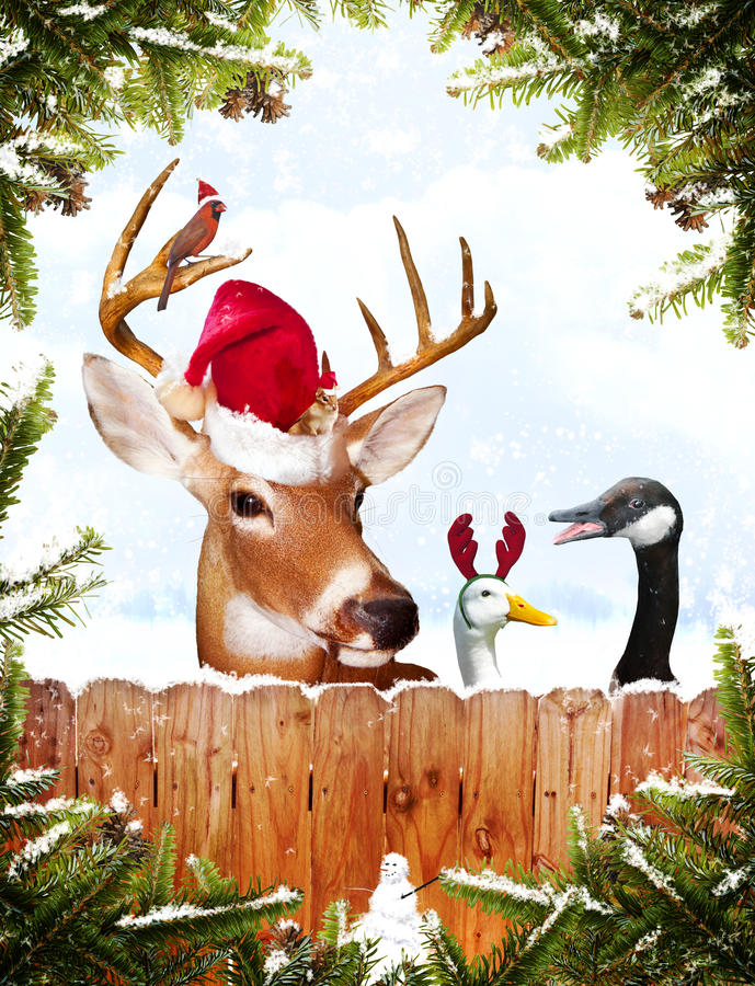 Free Christmas Animals Royalty Free Stock Photography - 16733037