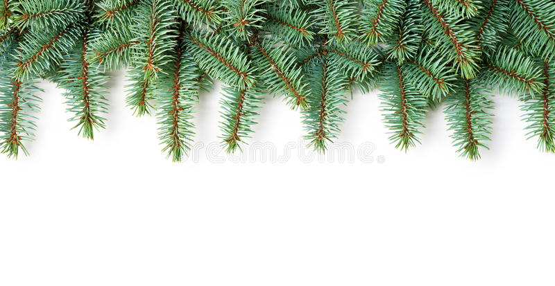 Christmas Background. Branches of silver spruce on white background stock image