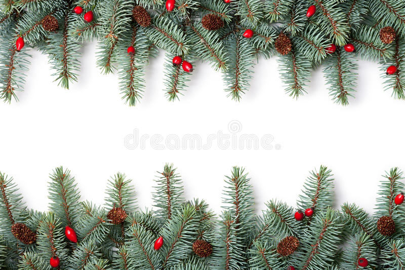 Christmas Background. Branches of silver spruce with plastic cones and natural briar on white background stock image