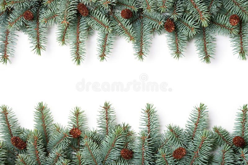 Christmas Background. Branches of silver spruce with plastic cones on white background. Copy space royalty free stock image