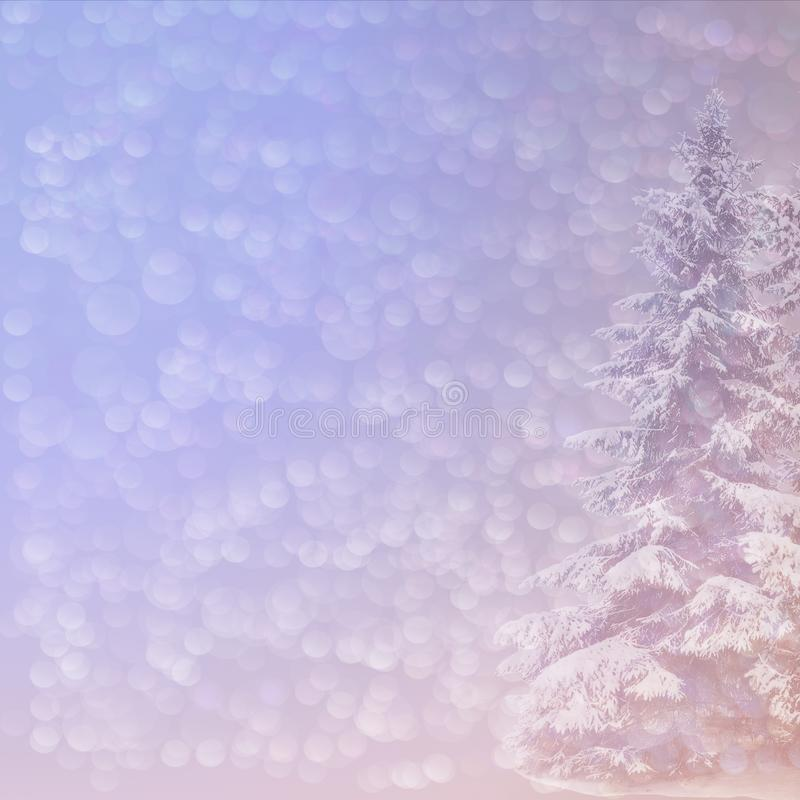 Christmas background with blurred snowy spruce and pearly bokeh. Gentle Christmas background with blurred snowy spruce and pearly bokeh stock images