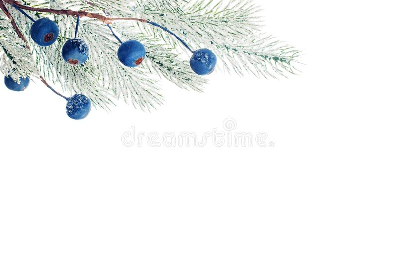 Christmas background border with green Xmas tree twig and frozen berries isolated on white.  royalty free stock photo