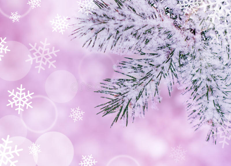Download Christmas Background With Fir-tree And Snow Stock Image - Image: 27422009